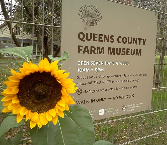 Image result for Queens County Farm Museum